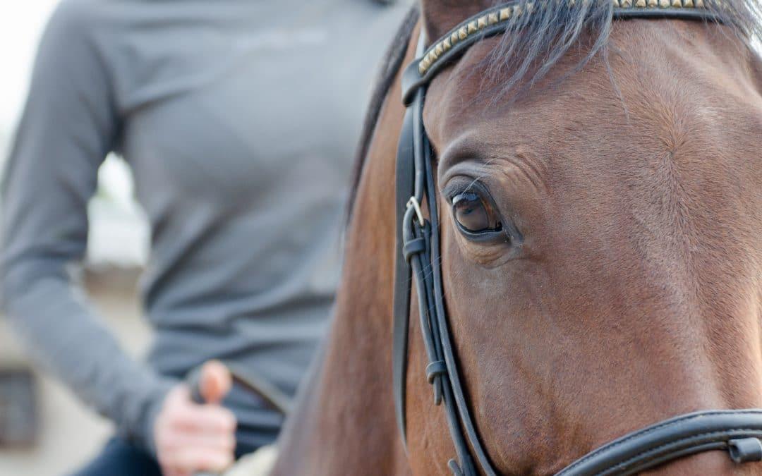 Sophrologie & Équitation